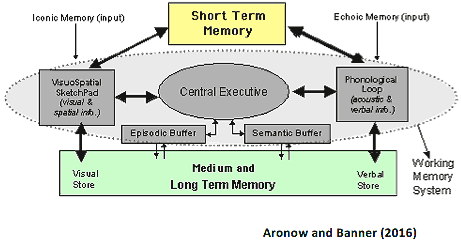a short review of the human memory and its processes This unintentional experiment showed that the hippocampus and medial temporal lobes are where the brain converts short term memory into long term memory  of the human mind and the human brain.